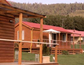 Maydena Country Cabins Accommodation  Alpaca Stud - Accommodation Sunshine Coast