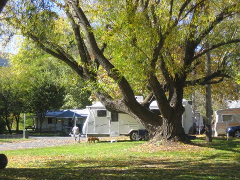 Tumbarumba Creek Caravan Park - Accommodation Sunshine Coast
