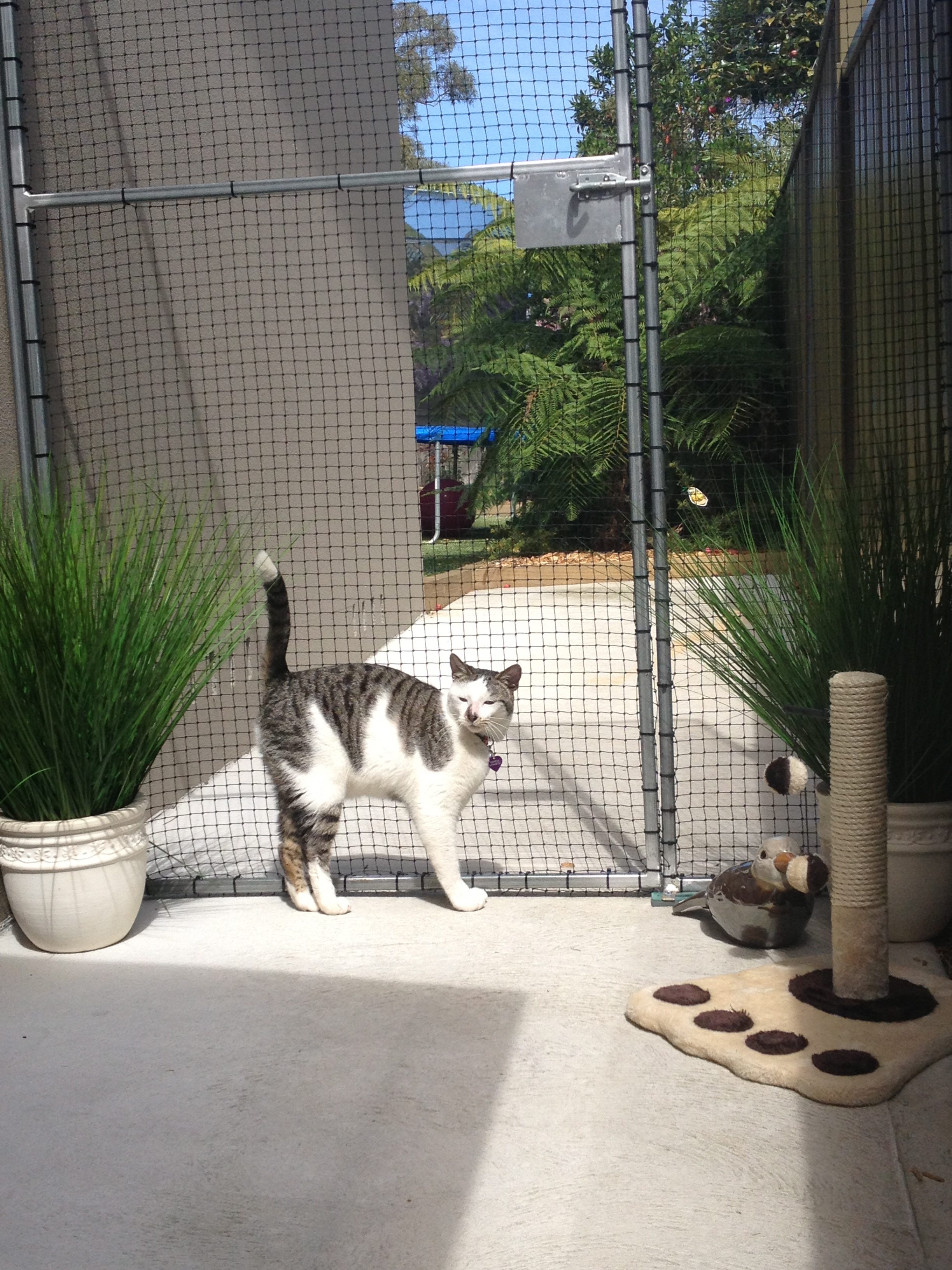 Caringbah Cat Hotel - Accommodation Sunshine Coast