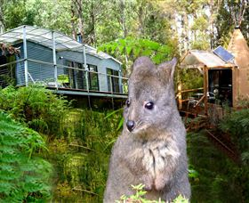 Huon Bush Retreats - Accommodation Sunshine Coast