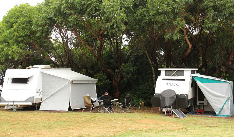 Pretty Beach campground - Murramarang National Park - Accommodation Sunshine Coast