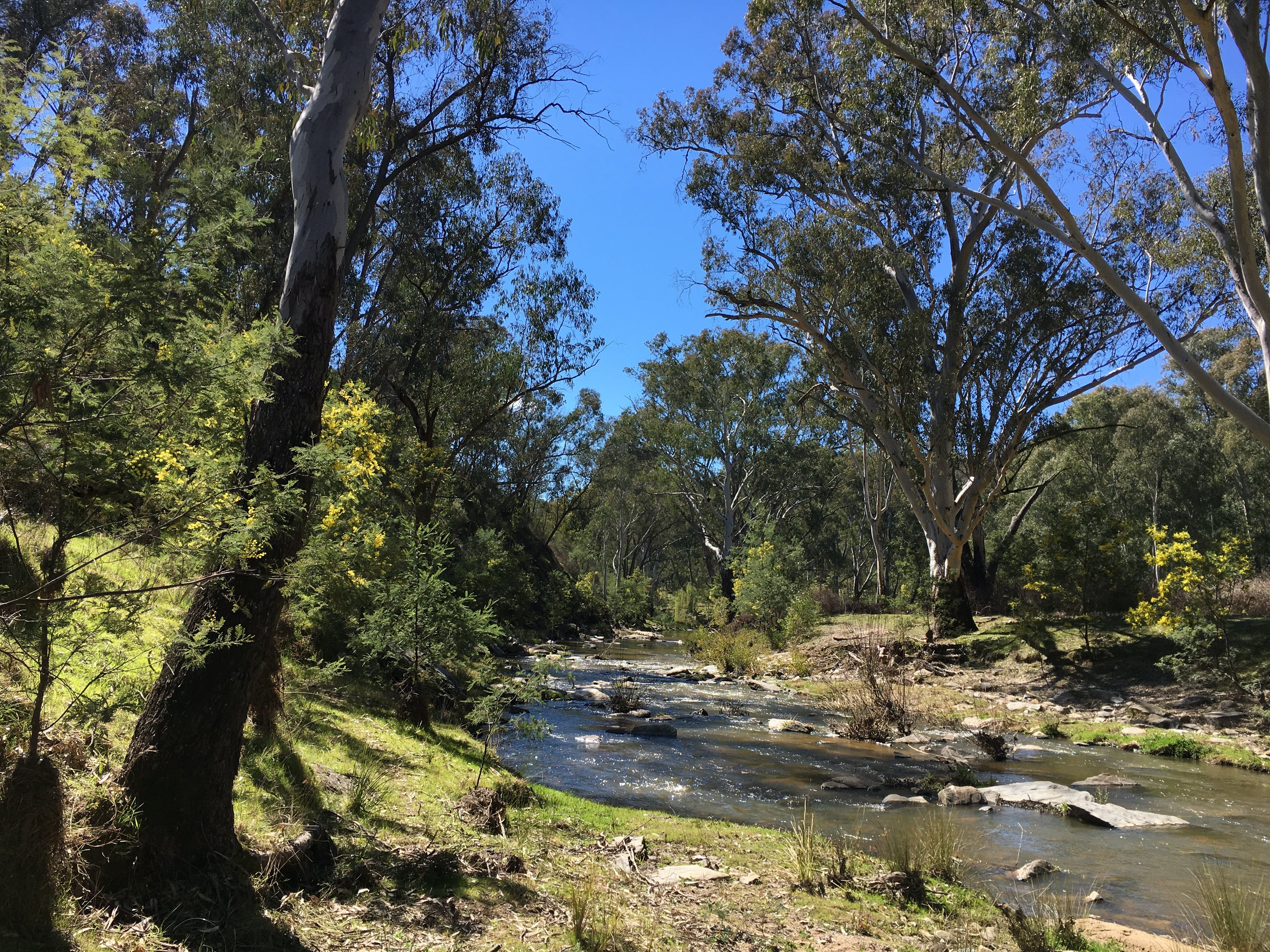 Highfield Farm and Woodland Bush Campsites - Accommodation Sunshine Coast