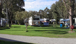 Pinjarra Caravan Park - Accommodation Sunshine Coast