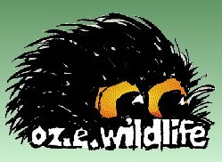 OZe Wildlife - Accommodation Sunshine Coast