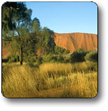 Uluru - Kata Tjuta National Park - Accommodation Sunshine Coast