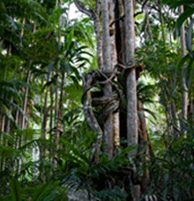 Rainforest Skywalk - Accommodation Sunshine Coast