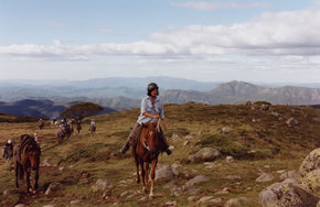 High Country Horses - Accommodation Sunshine Coast