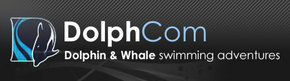 Dolphcom - Dolphin  Whale Swimming Adventures - Accommodation Sunshine Coast