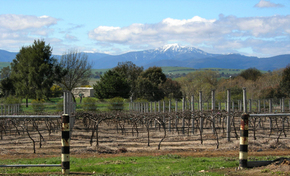 Buller View Wines - Accommodation Sunshine Coast