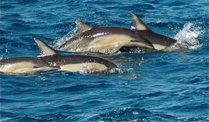 Dolphin Swim Australia - Accommodation Sunshine Coast