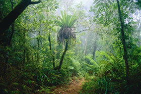 Lamington National Park and OReillys - Accommodation Sunshine Coast