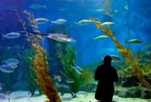 Melbourne Aquarium - Accommodation Sunshine Coast