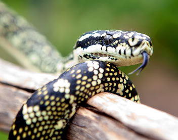 Reptile Encounters - Accommodation Sunshine Coast