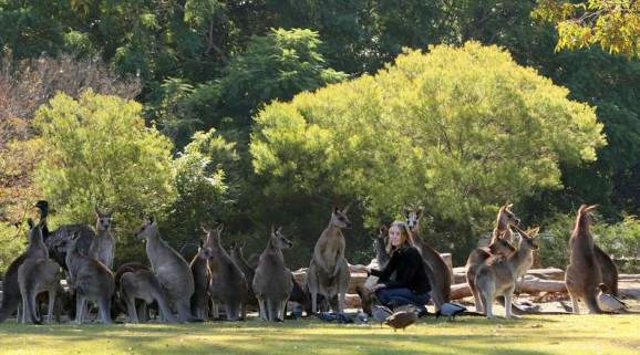 Lone Pine Koala Sanctuary - Accommodation Sunshine Coast