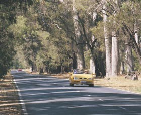 Ludlow Tuart Forest - Accommodation Sunshine Coast