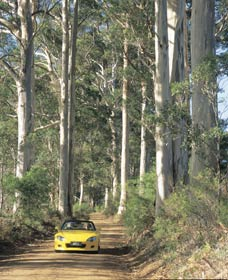 Mount Shadforth Scenic Drive - Accommodation Sunshine Coast
