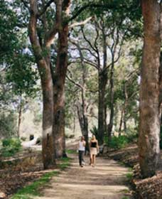 Law Trail and Lotterywest Federation Walkway, Kings Park