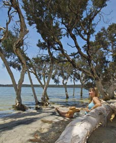 Stokes National Park - Accommodation Sunshine Coast