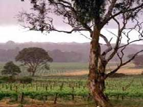 Yangarra Estate Vineyard - Accommodation Sunshine Coast