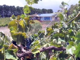 Zimmermann Wine - Accommodation Sunshine Coast