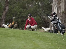 Tasmania Golf Club - The - Accommodation Sunshine Coast