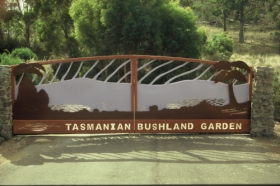 Tasmanian Bushland Garden - Accommodation Sunshine Coast