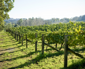 Surveyor's Hill Vineyards - Accommodation Sunshine Coast
