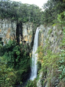 Gondwana Rainforests of Australia - Accommodation Sunshine Coast
