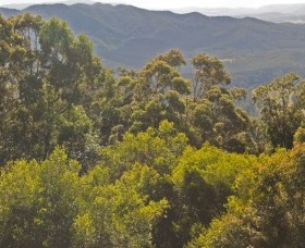 Conondale National Park - Accommodation Sunshine Coast