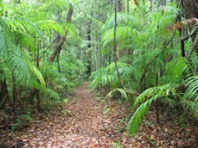 Delicia Road Conservation Park - Accommodation Sunshine Coast