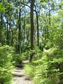 Mapleton Falls National Park - Accommodation Sunshine Coast