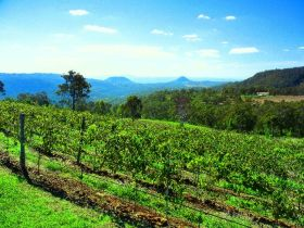 Preston Peak Wines - Accommodation Sunshine Coast