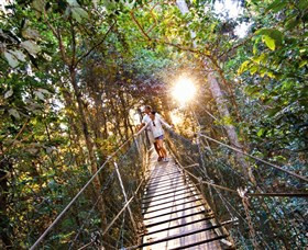 Tree Top Walkway - Accommodation Sunshine Coast