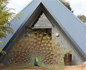 Halls Gap Zoo - Accommodation Sunshine Coast