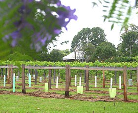 Douglas Vale Historic Homestead  Vineyard - Accommodation Sunshine Coast