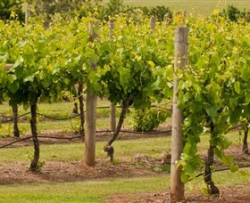 Mt Coghill Vineyard - Accommodation Sunshine Coast