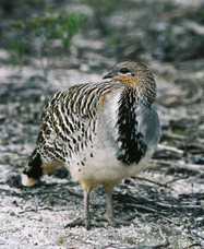 Yongergnow Australian Malleefowl Centre - Accommodation Sunshine Coast