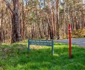 Lobs Hole Ravine 4WD Trail - Accommodation Sunshine Coast