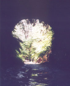Glow Worm Tunnel - Accommodation Sunshine Coast