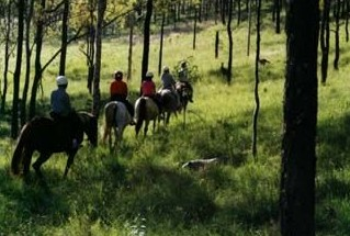 Hunter Valley Horse Riding and Adventures - Accommodation Sunshine Coast