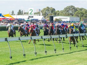 Morphettville Racecourse - Accommodation Sunshine Coast