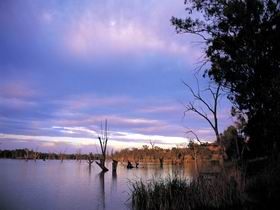 Loch Luna Game Reserve and Moorook Game Reserve - Accommodation Sunshine Coast