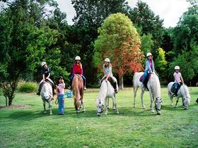 Limestone Coast Horseriding - Accommodation Sunshine Coast
