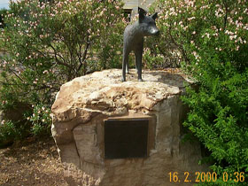 Dingo Statue - Accommodation Sunshine Coast