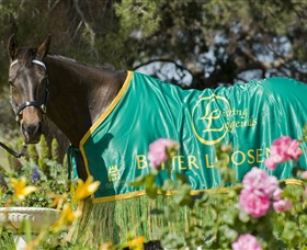 Living Legends The International Home of Rest for Champion Horses