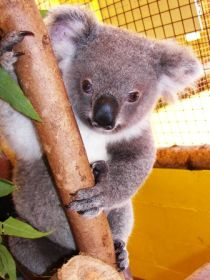 Cooberrie Park Wildlife Sanctuary - Accommodation Sunshine Coast