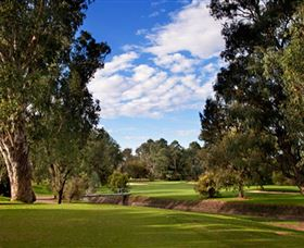 Commercial Golf Course - Accommodation Sunshine Coast
