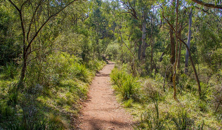 Mares Forest Creek walking track - Accommodation Sunshine Coast