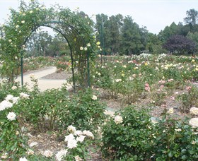 Victoria Park Rose Garden - Accommodation Sunshine Coast