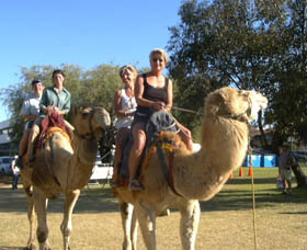Calamunnda Camel Farm  - Accommodation Sunshine Coast